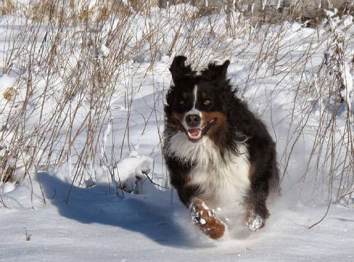 Very few breeds of dogs do well in constant loneliness and separation from their human pack