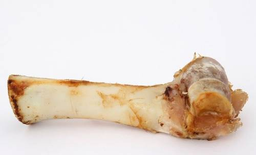 Chew bones can be bought at a pet store